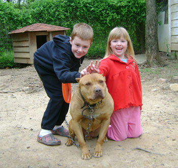 Our pit bull Kain with our kids.